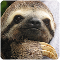 Sloth Sounds icon