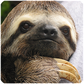Sloth Sounds