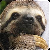 Sloth Sounds