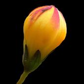 Floramo
