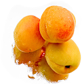 Apricot Fruit Wallpapers logo
