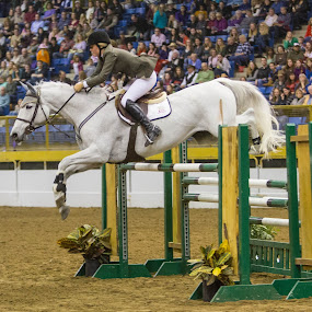 Hunters Jumpers by Hans Watson - Animals Horses ( hunters, jumpers, horse, white, competition, jump,  )