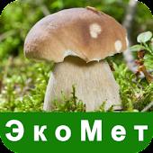 ЭкоМет: Изучение грибов