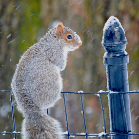 On the Fence by Rob Kovacs - Novices Only Wildlife (  )