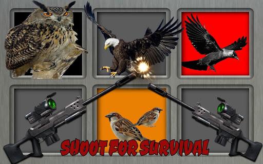 沙漠 鳥類 狩獵