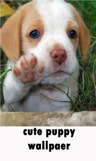 可愛的快樂小狗壁紙