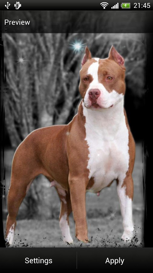 Pitbull Dog Live Wallpaper- screenshot