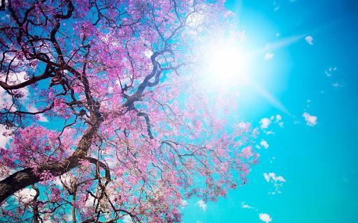 봄 배경 화면