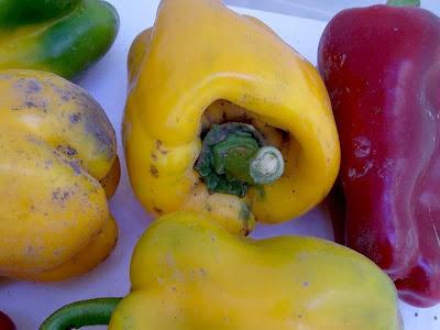 Capsicum annuum, cayenne pepper, Peperone