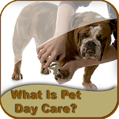 Pet Day Care Guide