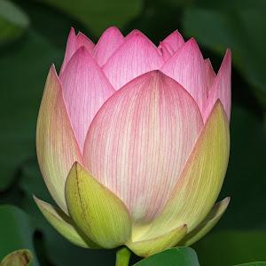 Flowers 131214 5.jpg