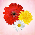 Primerun Flowers make gift 1+1 icon
