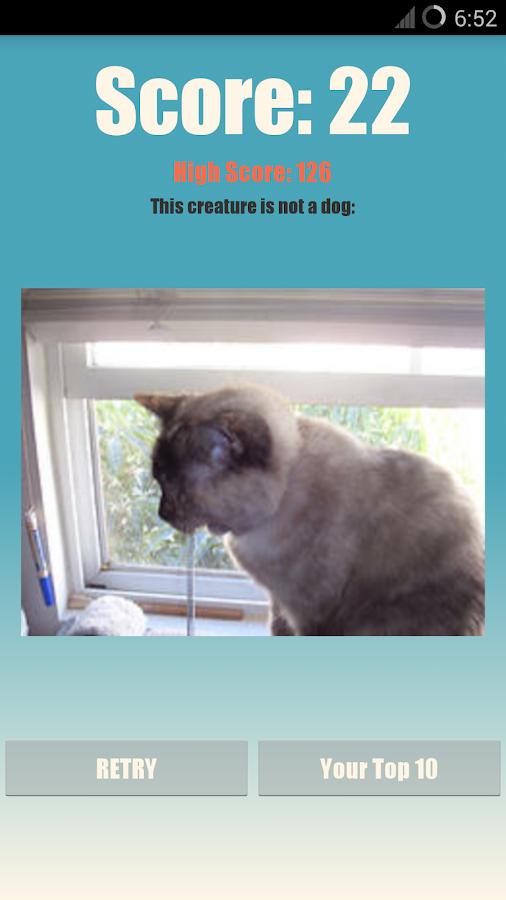 Cat or Dog?- screenshot