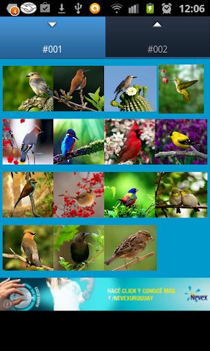 3D鸟铃声和声音