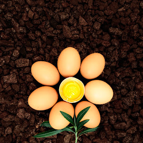 Egg Petals by Hoover Tung - Artistic Objects Other Objects ( breakfast, shape, leaf, yellow, egg, morning, yolk, cholesterol, spring, egg plant, fresh, color, food, shadow, protein, healthy, cooking, dirt, flower, soil, Hope,  )