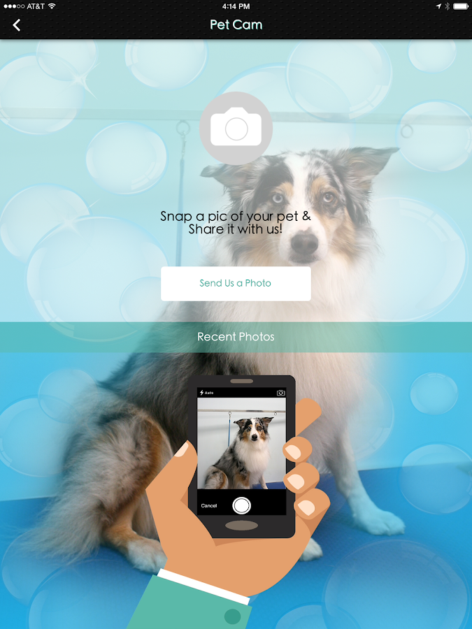Palm coast pet spa android apps on google play for A wagging tail pet salon