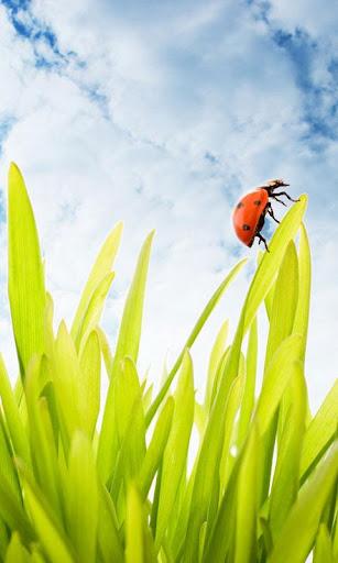 Ladybug Wallpaper Live HD