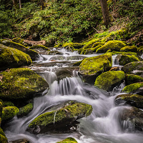Smokey Mountain Stream by Mike Moss - Landscapes Waterscapes ( smokey mountains )