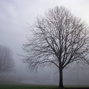 Misty Tree by Barrington Dent - Landscapes Weather