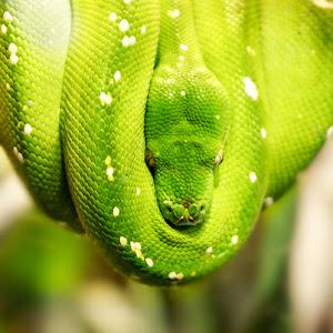 2015-02-14 - green snake-1.jpg