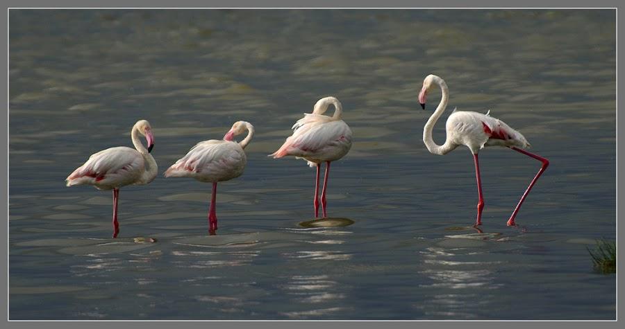 by Vaibhav Jaguste - Animals Birds ( animal, butterfy )