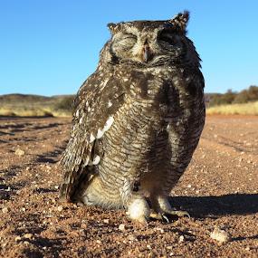 The big one. by Kleintjie Loots - Animals Birds