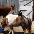 Horses of New England
