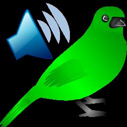 鳥コールの音