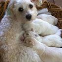 Dog/Puppies
