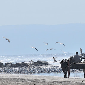 Bullock Cart on  the beach  by Joydeep Sen Chaudhuri - Transportation Other ( sea, bullock cart, beach, birds )