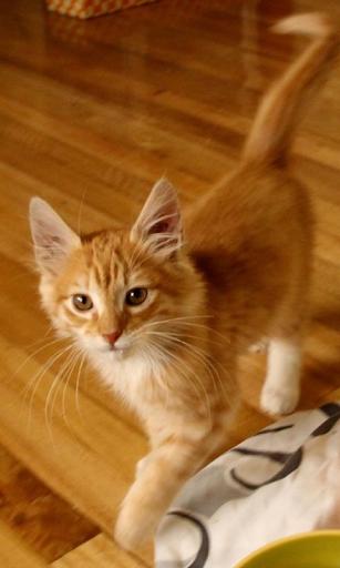 玩個人化App|Jengibre gatito Steep es 1免費|APP試玩