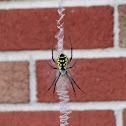 Writing Spider