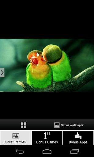 Cutest Parrots Wallpapers HD