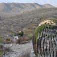 Biodiversidad de Nuevo Leon