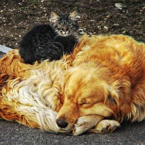 by Branko Levačić - Animals - Dogs Playing