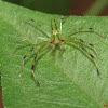 Magnolia Green Jumper (male)