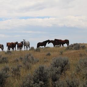 at Little Big Horn battle ground by Tamara Koontz - Landscapes Prairies, Meadows & Fields ( path, nature, landscape )