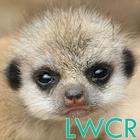 baby meerkat live wallpaper icon
