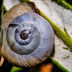 by Barry Ooi - Nature Up Close Other Natural Objects ( snails )