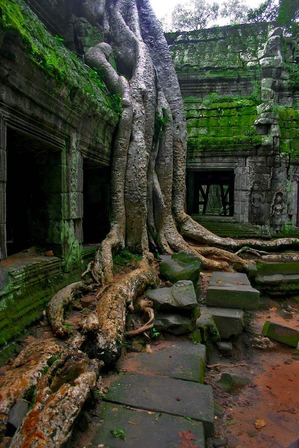Tree vs buidling by David Gonzalez - Buildings & Architecture Decaying & Abandoned ( jungle temple, siem reap )