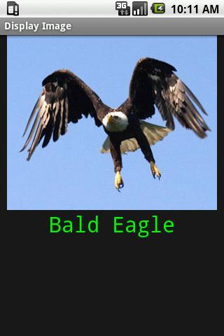 Baby Bird Park- screenshot