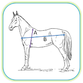 Horse Weight Calculator