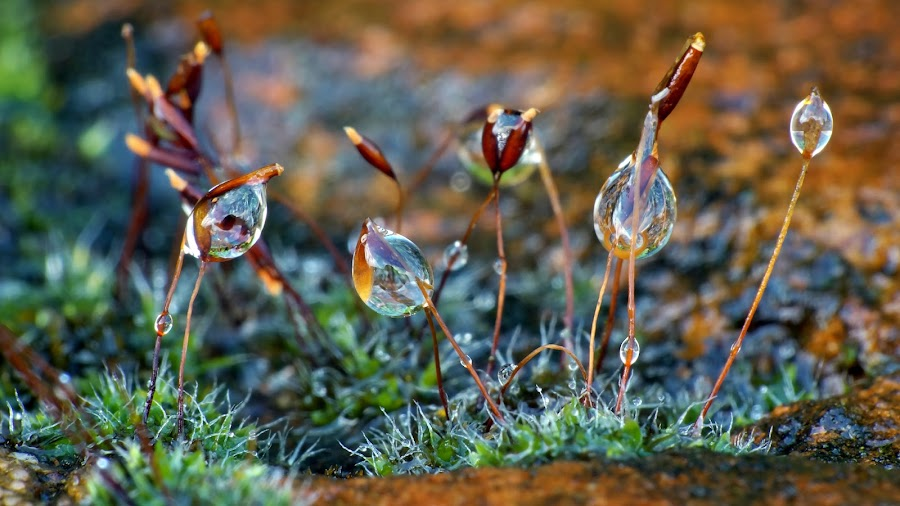 Drops in Moss by Wijnand Kroes - Nature Up Close Mushrooms & Fungi