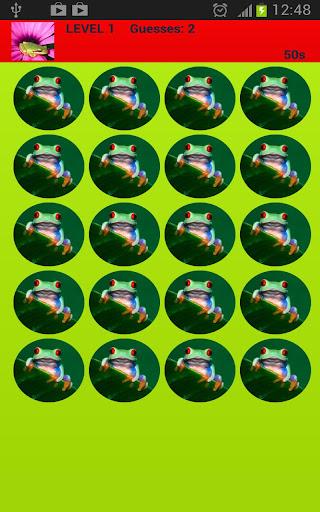 다채로운 개구리 메모리 게임