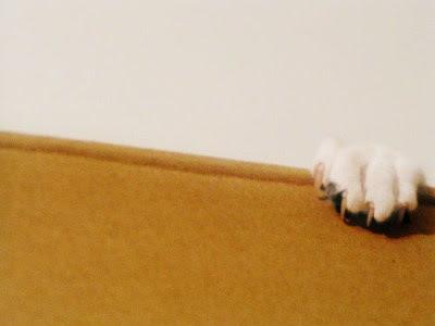 Cat paw grabbing