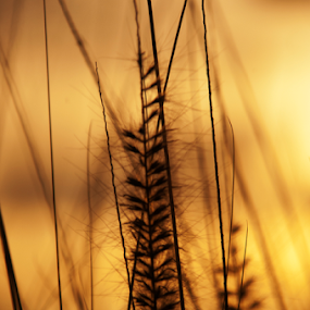 Grass by Cristobal Garciaferro Rubio - Abstract Fine Art ( grass, bokeh, field grass )