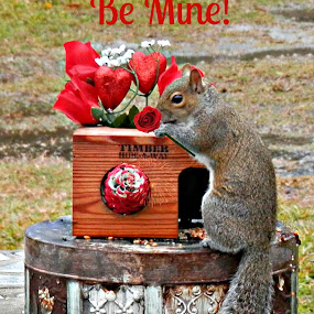 Be Mine! by Cheryl Beaudoin - Typography Captioned Photos ( love, holiday, hearts, red, valentines, roses, day, valentine, squirrel, improving mood, moods, the mood factory, inspirational, passion, passionate, enthusiasm,  )