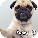 Funny Dog Pictures & Wallpaper icon