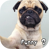 Funny Dog Pictures & Wallpaper