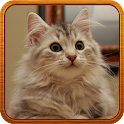 cat Ringtone icon